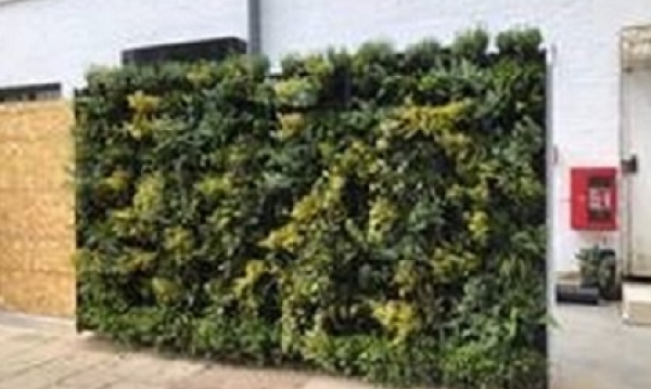 Living wall in Cricklewood: